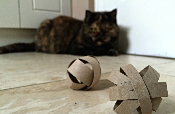 DIY-Cat-Toy-Make-a-quick-toy-for-your-pet-from-TP-Rolls