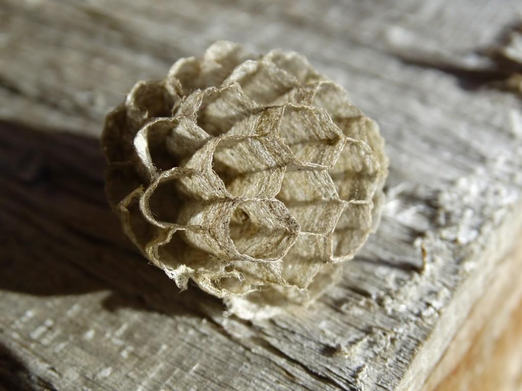 wasp-combs-493729_1280