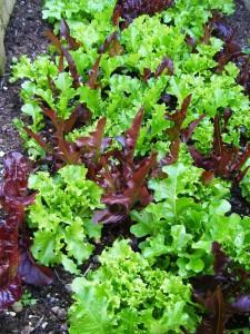 salad-627202_1280