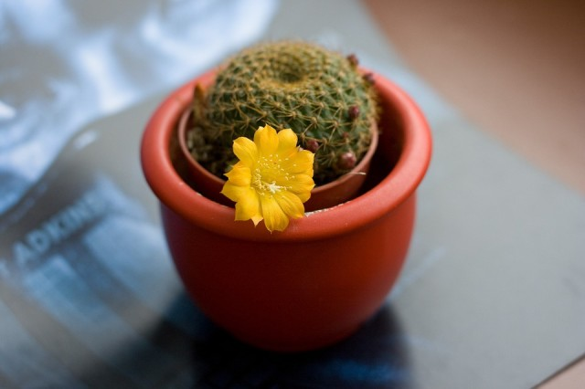 cactus-997594_960_720