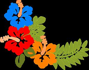 hibiscus-303191_960_720