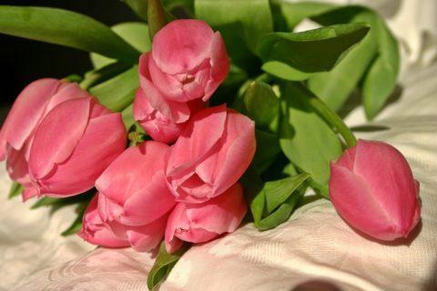 tulip-501740_960_720