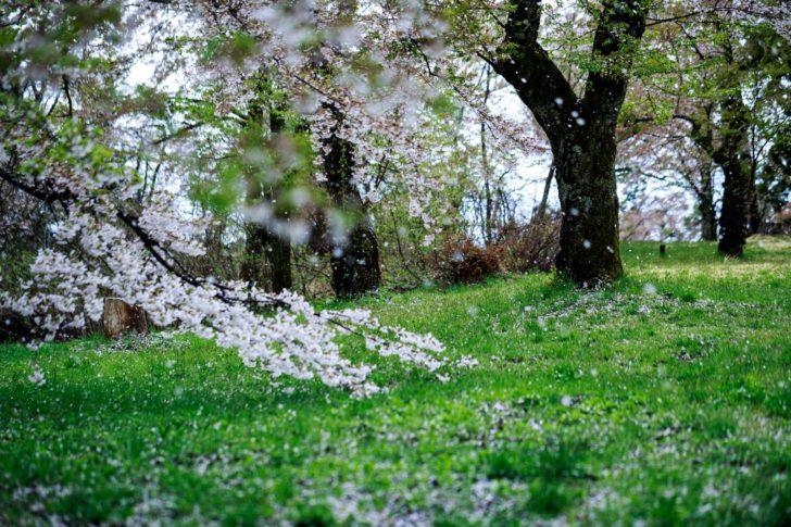 春暖の候、その意味や使う時期は...